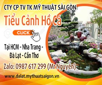 Top hình ảnh thi công hồ cá koi mini tại thành phố Đà Lạt
