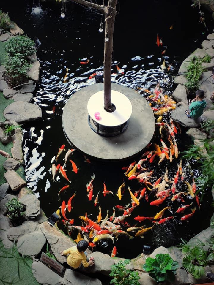 Top 7 quán cà phê cá koi thu hút khách nhất tại Huế