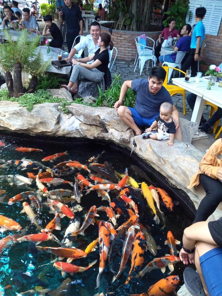 Top 4 quán cà phê cá koi thu hút khách nhất tại Bà Rịa - Vũng Tàu